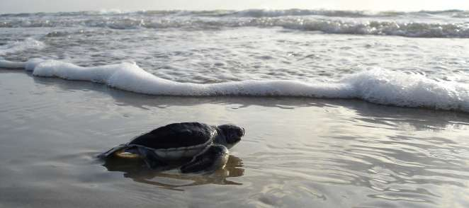 Green sea turtle 1185954 1920