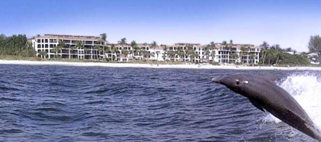 PS dolphin thriller screenshot